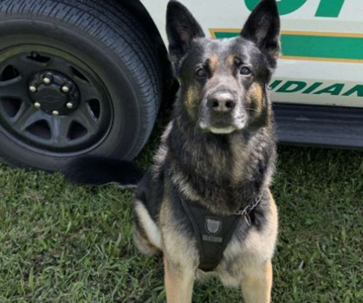 K9 Ruckus (Indian River County Sheriff's Office)